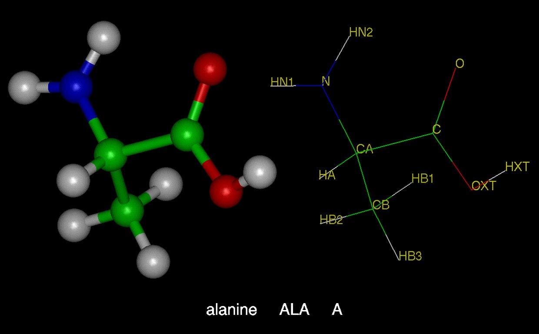 Заменимая аминокислота аланин