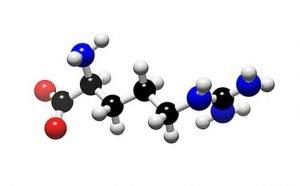аминокислота ортинин