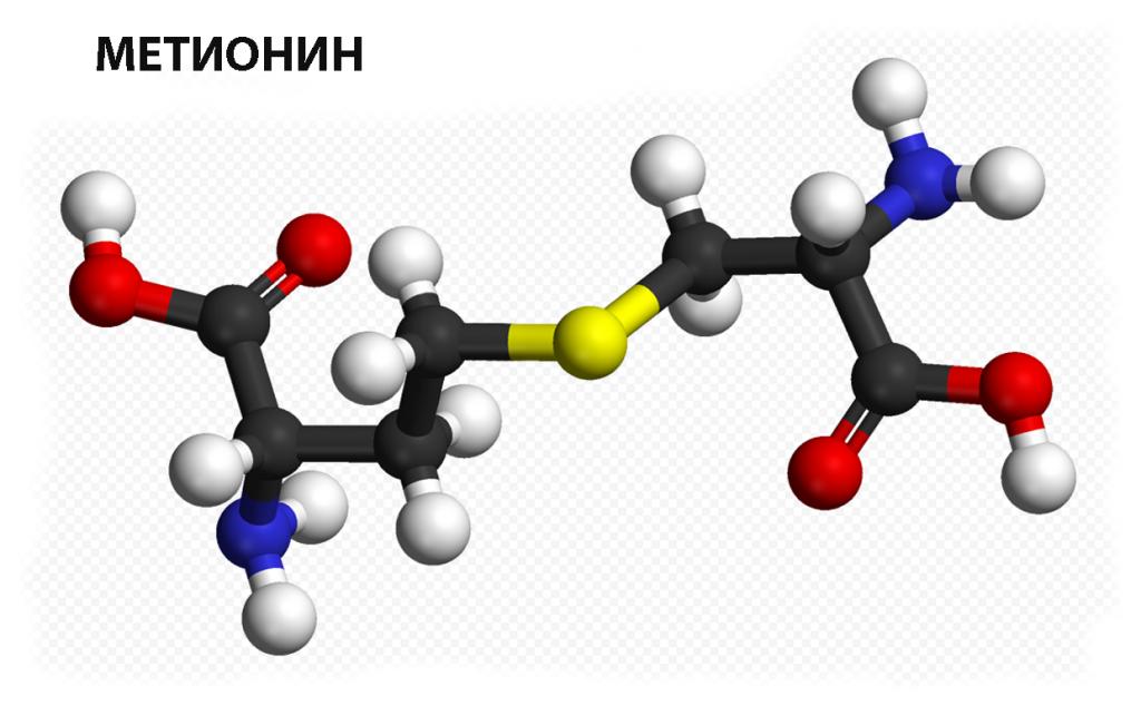 Незаменимая аминокислота метионин для здоровья и спорта копия