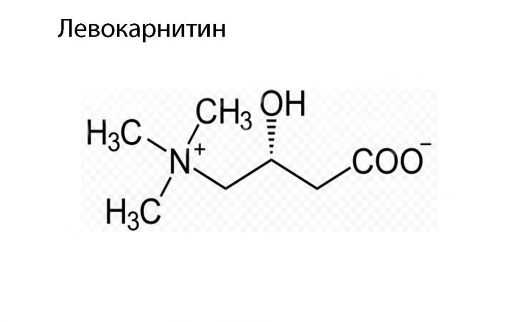 Полезные свойства L-карнитина копия