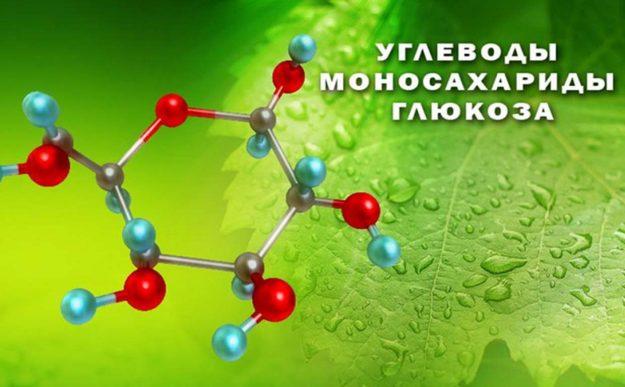 какие вещества называются углеводами