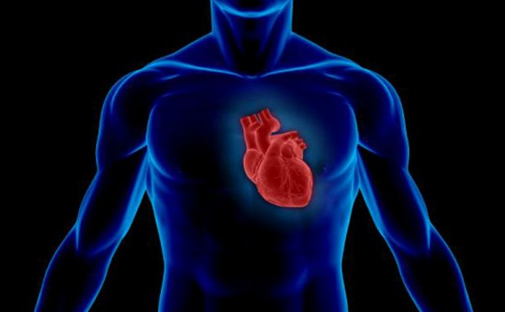 Анаболические стероиды и риск сердечно-сосудистых заболеваний