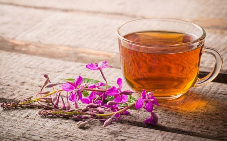 Органы пищеварительного тракта: влияние иван-чая на ЖКТ
