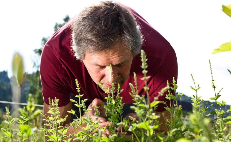 ароматы трав