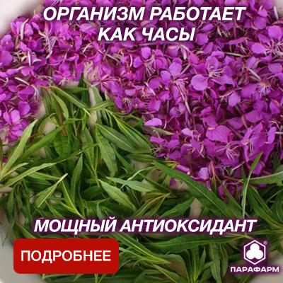 Трава Иван-чая
