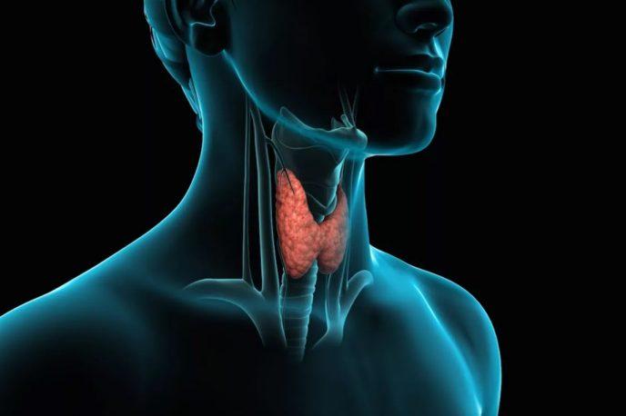 препарат для щитовидной железы