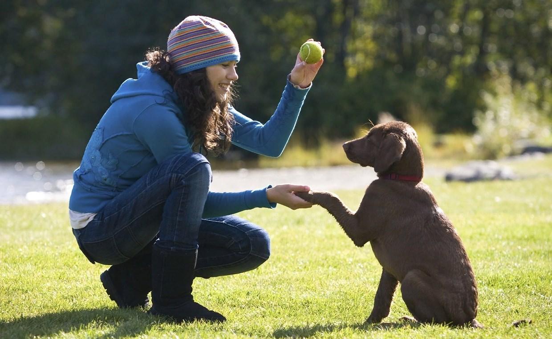 Команды для собак